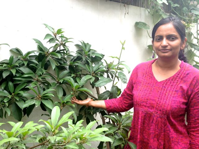 Organic Gardening Emerging In India The Sourcing Blog