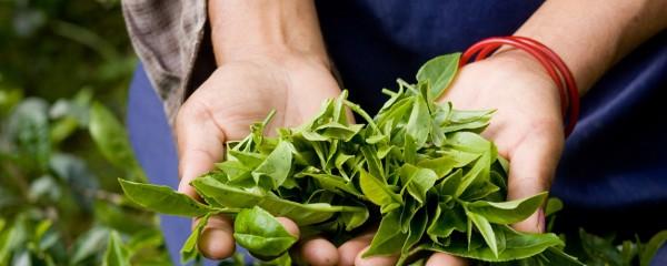 Organic Gardening Emerging in India
